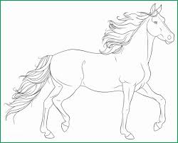 Horse Coloring Pages For Adults Beautiful Animal Outlines To Colour