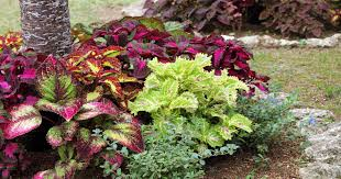 plantings for fall in central fl