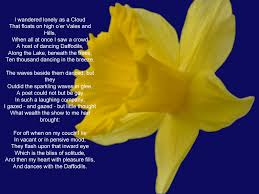 daffodils poem saferbrowser yahoo image search results  daffodils poem by william wordsworth when reading the poem it makes me think of my mum x