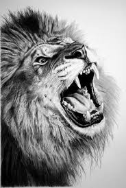 easy lion drawings in pencil. Fine Drawings Easy Pencil Drawings Of Lions Lion Face Pencil Drawings With In A
