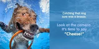 this book will surely bee a bedtime favorite of any kid who gets it which dogster can help make happen we have three copies of underwater dogs kids