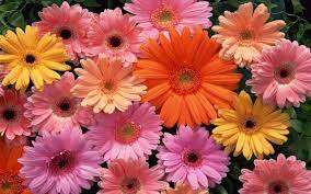 2560x1600, Flowers Wallpapers ...