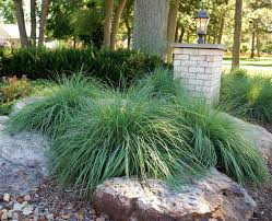 Small Picture 27 best drought tolerant garden ideas images on Pinterest