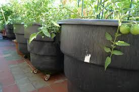image of large outdoor planters and pots