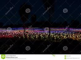 Field Of Light Uluru Free Field Of Lights Art Installation Stock Photo Image Of