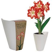 wilko ceramic amaryllis pot image 1