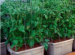 Best 25 Container Vegetable Gardening Ideas On Pinterest Container Garden Ideas Vegetables
