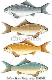 fish drawing for colouring. Contemporary Drawing Set Of Live Colour Fish  Csp19299067 For Fish Drawing Colouring