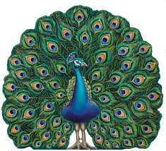 Peacock Fire Screen Decorative Wooden Pieces .