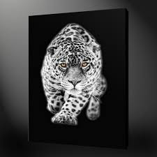 white leopard premium canvas print picture wall art  on snow leopard canvas wall art with canvas print pictures high quality handmade free next day delivery