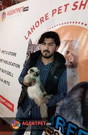 AgentPet - Pet Show in Lahore | Pets for sale, City pets, Pets online