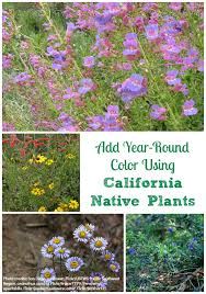 california native plants for the garden. How To Add Year-Round Color My Garden Using California Native Plants? Plants For The