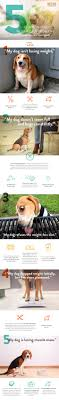 Dog Weight Loss Chart A Weight Loss Guide For Your Obese Dog Nomnomnow