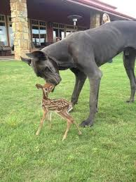 Image result for rare cute  animals