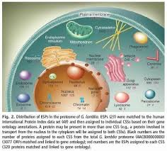 eukaryotic cells and their origin