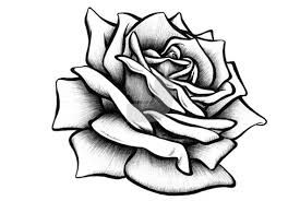 Small Picture Drawn Rose bestcameronhighlandsapartmentcom