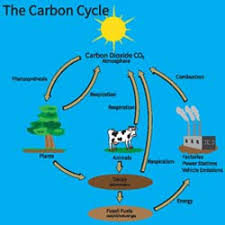 the connection between and the carbon cycle carbon is a natural element in the environment and does serve its purpose on earth carbon dioxide feeds plants and they turn it
