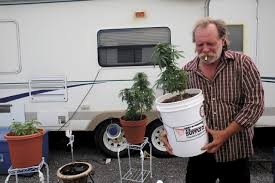 to enlarge bill rader 60 carries his favorite plant outside in pueblo west to soak