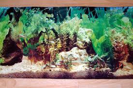 fish tank background diy