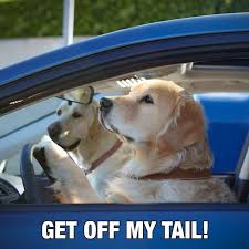 2018 subaru dog commercial.  commercial join subaru in honoring pets of all shapes and sizes visit the pets hall  fame see commercials help support pet philanthropy and 2018 subaru dog commercial