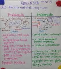 Prokaryote Vs Eukaryote Glad Anchor Chart Notes Scientific