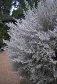 Small Picture Mallee Design native Australian garden design Servicing North