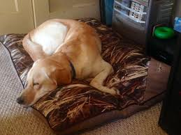 Redhead weatherproof camo pet bed