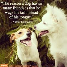 Quotes About Dogs And Friendship Inspiration Download Quotes About Dogs And Friendship Ryancowan Quotes
