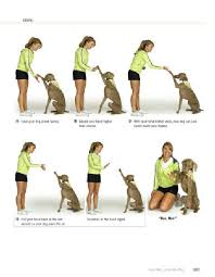 Dog Training Hand Signals Pdf