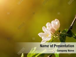 Spring Powerpoint Background Nature Sunny Spring Powerpoint Template Nature Sunny