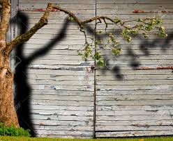 Blossoming Apple Tree With Shadow On Garage Door With Peeling ...