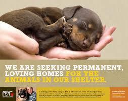 animal shelter volunteer poster. Animal Shelter Volunteer Recruitment Flyer Templates Invitation Inside Poster