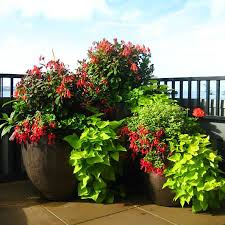 container garden. Container Garden Plantings Bring Life And Movement Into Your Home. They Become An Expression Of Style Create Inviting Atmosphere To Both Indoor U
