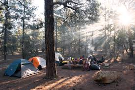 landscape tree forest wilderness people adventure camping trees outdoors woods fun tents screenshot outdoor recreation sun in the p2 camping