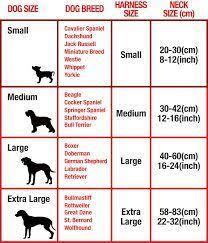 Dog Color Chart Znalezione Obrazy Dla Zapytania Dog Collar Size Chart Cm