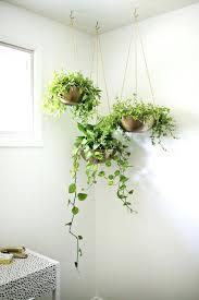 how to hang plants indoors indoor garden x pics of hanging wall plants indoor how to