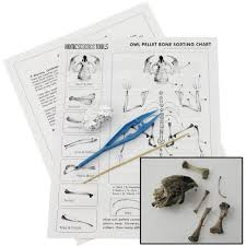 Owl Pellet Bone Chart Owl Pellet Dissection Kit