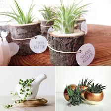 cute office decorations. Large Size Of Cute Office Plant Aloe Vera Wood Desk Planter White Ceramic Decorations