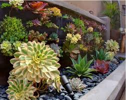Small Picture Beautiful combination of black rocks and succulents River Rocks