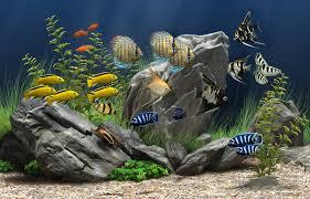 Tami Holman Fish Tank Wallpaper Hd
