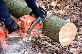 Tips for Selecting the Best Tree Cutting Service - FeedsPortal.com