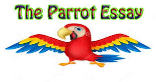 the parrot essay in english hania naz grammar parrot