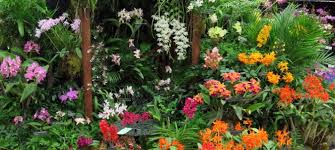 naples orchid society annual show at naples botanical garden