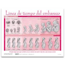 Timeline Of Pregnancy Chart Childbirth Graphics