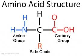 Mcat Amino Acid Chart Amino Acids The School Of Biomedical Sciences Wiki