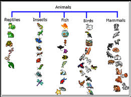 Animal Genus Chart Animals Tree Map For Kidpix Site Has Other Mind Map Samples