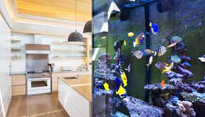 Image result for benefits of aquarium in the house