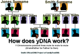how do family trees work smith official all background family tree dna