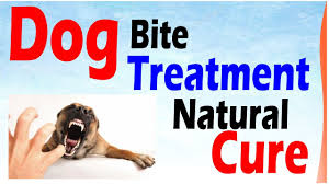 dog bite treatment natural cure  dog bite treatment natural cure