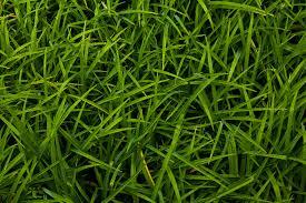 grass texture hd. Interesting Texture For Grass Texture Hd R